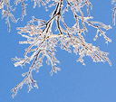 [Fractals in Ice] - frozen tree branches, ice storm, abstract