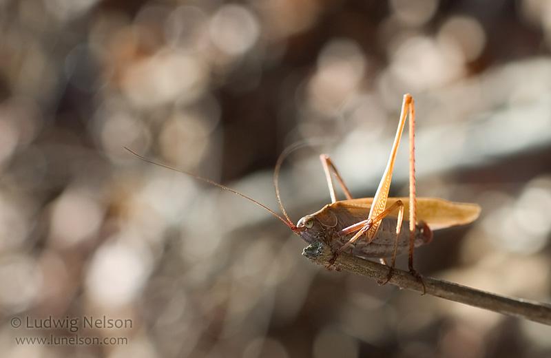 - grasshopper_3.shtml