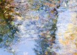 [Monet is Eternal] - impressionist, leaves, reflection, fall, autumn, foliage