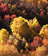[Autumn] - foliage, red, yellow, orange, trees, leaves, hill