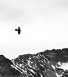 [Fly high] - raven, silhouette, black and white, monochrome, snowy mountains
