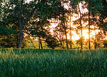 [Gone Again] - squaw creek national wildlife refuge, sunset, grass, trees